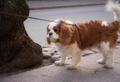 Dogilike.com :: 5 สายพันธุ์น้องหมาที่เหมาะกับสาว ๆ แต่ละสไตล์!