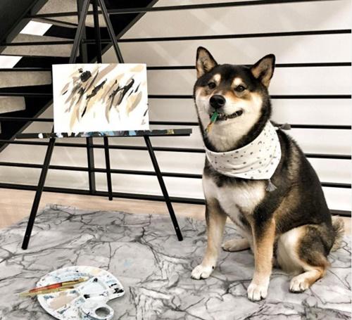 Dogilike.com :: цыИ╗я║Ю╗Ир Hunter ╙т╨п╧Хрця║╥уХгр╢цы╩╒рб╥сцрбД╢ИкербкавХ╧╩м╧╢Л!
