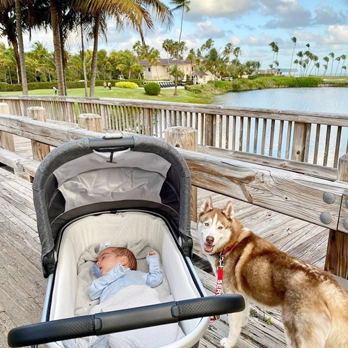 Dogilike.com :: น่ารักละลายใจ! เจ้า Pizza ฮัสกี้ที่ทำหน้าที่เป็นพี่เลี้ยงทารกฝาแฝด