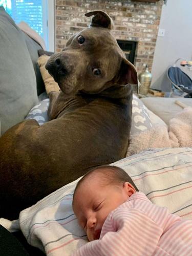 Dogilike.com :: พี่หมาแสนรู้คาบหมอนไปให้หนูน้อยทุกครั้งที่ได้ยินเสียงร้องไห้!
