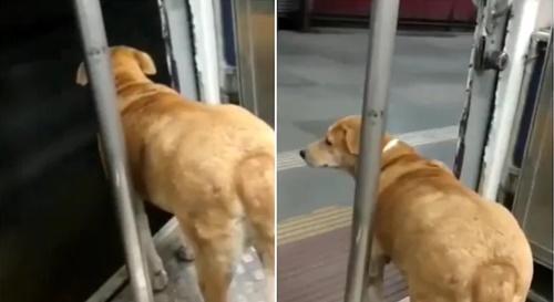 Dogilike.com :: คลิปไวรัล 1 ล้านวิว! เจ้าตูบแสนรู้รอลงจากรถไฟในอินเดีย