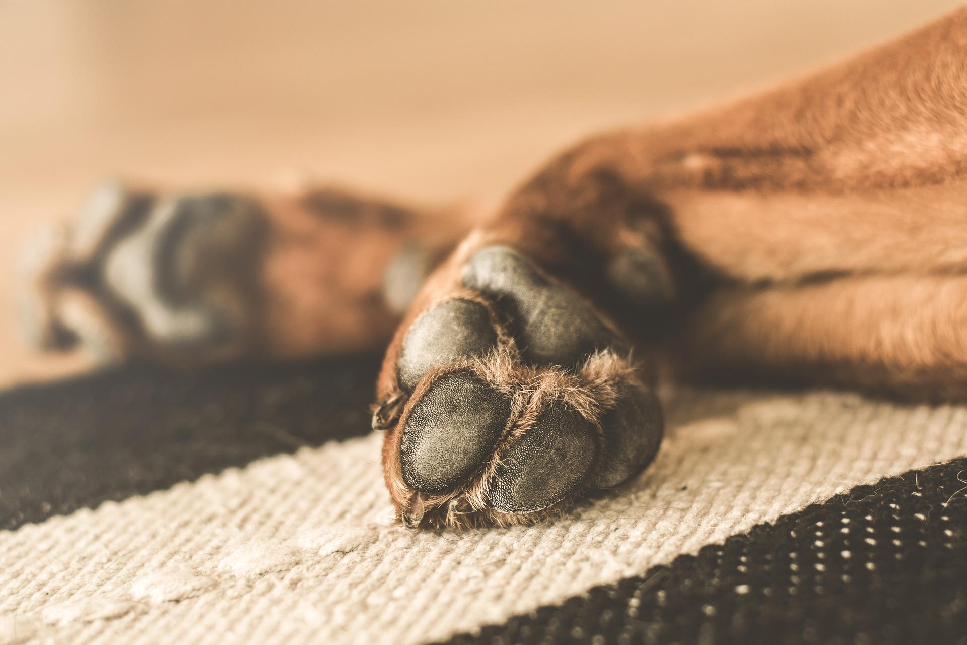 Dogilike.com :: เคล็ด(ไม่)ลับ น้องหมาอุ้งเท้าแห้งและแตกป้องกันได้!