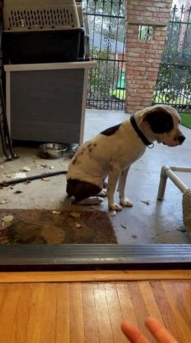 Dogilike.com :: นาทีบีบหัวใจ คลิปตูบจรจัดที่ใช้ชีวิตข้างถนนมาตลอด ไม่กล้าก้าวเข้าบ้าน!