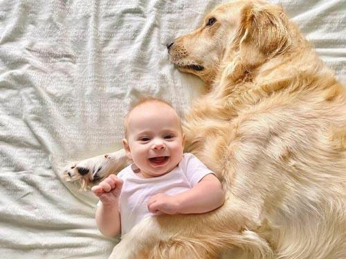 Dogilike.com :: พี่หมาโกลเด้นฯ รับบทเป็นพี่เลี้ยงหนูน้อยตั้งแต่เล็กจนโต!