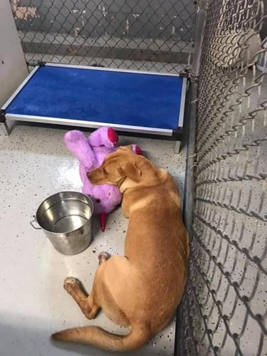 Dogilike.com :: หนูอยากได้! ตูบไร้บ้านเดินเข้าร้านขายของ ขโมยตุ๊กตายูนิคอร์น