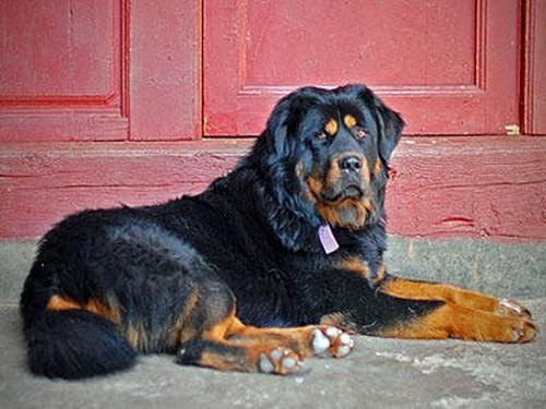 Dogilike.com :: จัดอันดับ 5 สายพันธุ์สุนัขที่แพงที่สุดในโลกปี 2021