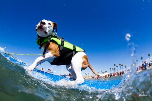 Dogilike.com :: แก๊งน้องหมาร่วมแข่งเซิร์ฟบอร์ด นำเงินช่วยเพื่อนสี่ขา!