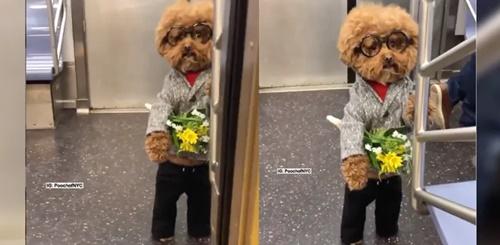 Dogilike.com :: คลิปดังจาก Tiktok เมื่อน้องหมายืนถือดอกไม้รอใครบางคน!