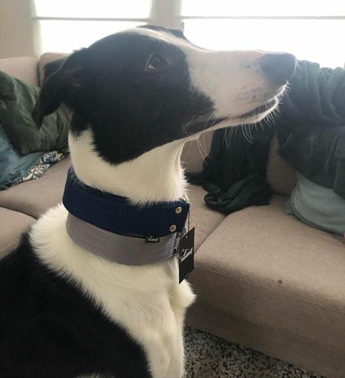 Dogilike.com :: หมาหรือยีราฟ เจ้าแกสบี้ น้องหมาที่มีคอยาวเป็นเอกลัษณ์!