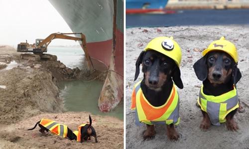 Dogilike.com :: ไวรัลน่ารัก! คลิป 2 ดัชชุนขุดคลองสุเอซ ช่วยเรือ Ever Given