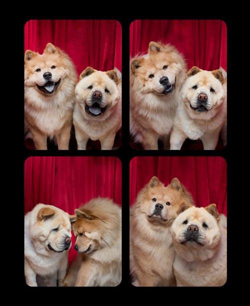 Dogilike.com :: ไวรัลน่ารัก! เมื่อแก๊งน้องหมาถ่ายภาพในโฟโต้บูธ
