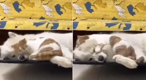 Dogilike.com :: ใครว่าหมาแมวไม่ถูกกัน! คลิปเหมียวขี้อ้อนขอนอนข้าง ๆ เจ้าตูบ