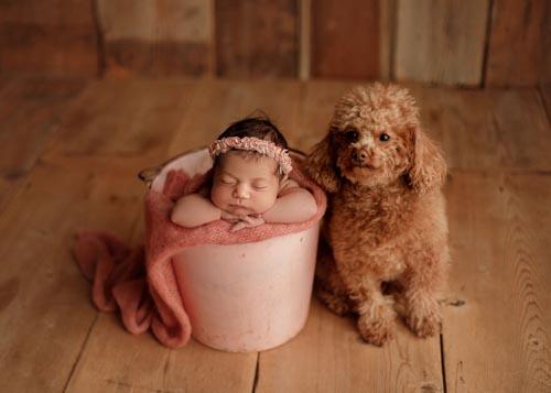 Dogilike.com :: น่ารัก! ภาพครอบครัวอบอุ่นขึ้นเมื่อมีน้องหมาสมาชิกคนสำคัญ