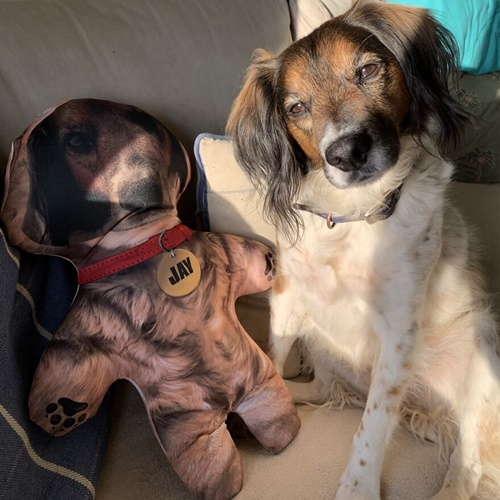 Dogilike.com :: Mini-Mes ตุ๊กตาย่อส่วนสัตว์เลี้ยง น่ารัก กอดได้ ไร้ขน!