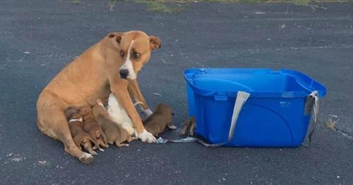 Dogilike.com :: เศร้า! พบแม่สุนัขและลูกเล็ก 9 ตัวถูกทิ้งที่ลานจอดรถโบสถ์