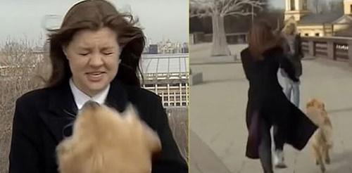 Dogilike.com :: โกลเด้นฯตัวแสบขโมยไมค์นักข่าวสาว ขณะกำลังถ่ายทอดสด