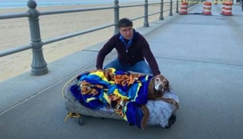 Dogilike.com :: เจ้าของทำเตียงนอนเคลื่อนที่ พาตูบสูงวัยชมวิวก่อนจากลา!