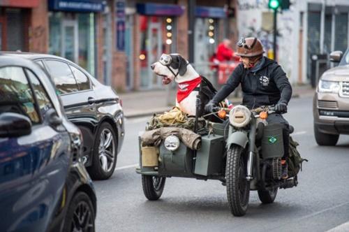 Dogilike.com :: เกรทเดนตัวโตชอบนั่งรถเล่น พากันหลงรักกันทั้งเมือง!