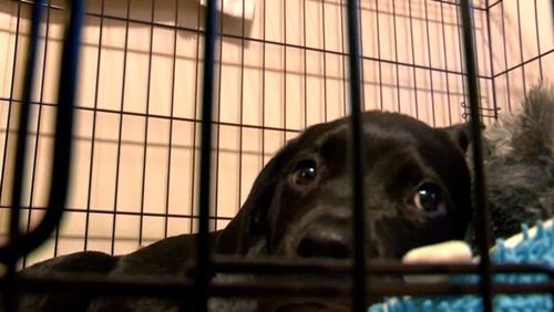 Dogilike.com :: ชื่นชม! หนูน้อยขายการ์ดโปเกมอนสุดรัก หาเงินรับษาลูกหมาป่วย