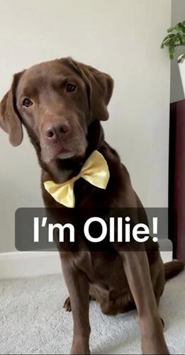Dogilike.com :: Ю╗Ир╣ы╨╧я║╨рер╧╚Л гр╖╥ь║мбХр╖Д╢И╨╧╨яИ╧╥рб!