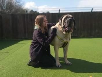 Dogilike.com :: ศูนย์พักพิงฯ ตามหาบ้านใหม่ให้เจ้าตูบน้ำหนัก 100 กิโลกรัม!