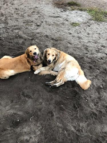 Dogilike.com :: เผยเรื่องราวน่ารัก เมื่อ 2 ตูบบังเอิญพบกันที่สวนสุนัข จำกันได้ว่าเป็นพี่น้องกัน