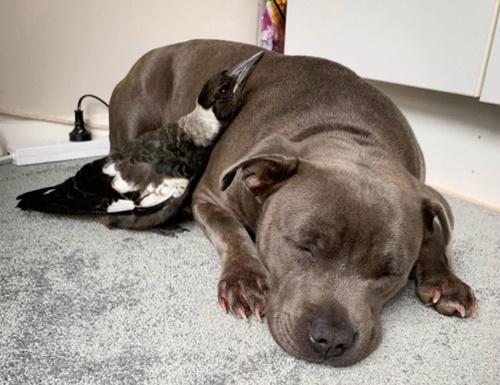 Dogilike.com :: ตูบมีเพื่อนซี้เป็นนกน้อย หลังช่วยชีวิตมาจากข้างทาง