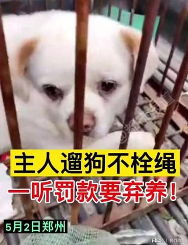 Dogilike.com :: วิจารณ์เดือด! สาวทิ้งตูบไว้ข้างถนน เลี่ยงค่าปรับไม่ใส่สายจูงในที่สาธารณะ