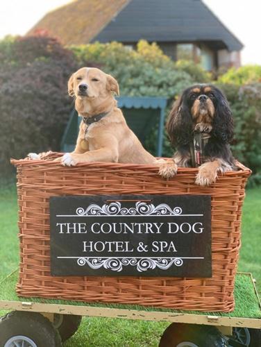 Dogilike.com :: ธุรกิจโรงแรมสุนัขได้รับความนิยมในสถานการณ์โควิด-19