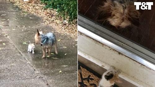 Dogilike.com :: ไวรัลน่ารัก! ตูบพาลูกแมวถูกทิ้งกลางสายฝนกลับบ้านไปหาเจ้าของ
