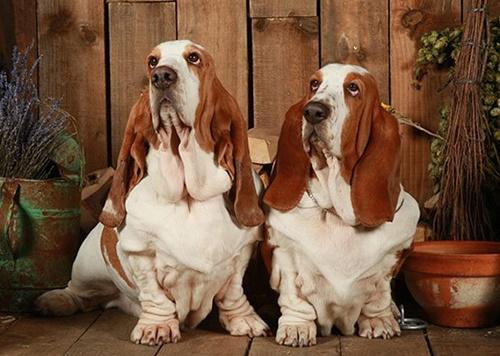 Dogilike.com :: 5 สายพันธุ์สุนัขที่เป็นมิตรกับน้องหมาตัวอื่น ๆ