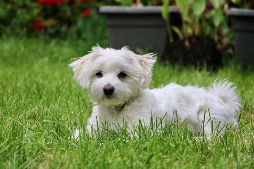 Dogilike.com :: จัดอันดับ 5 สายพันธุ์น้องหมาเหมาะเลี้ยงในเมือง