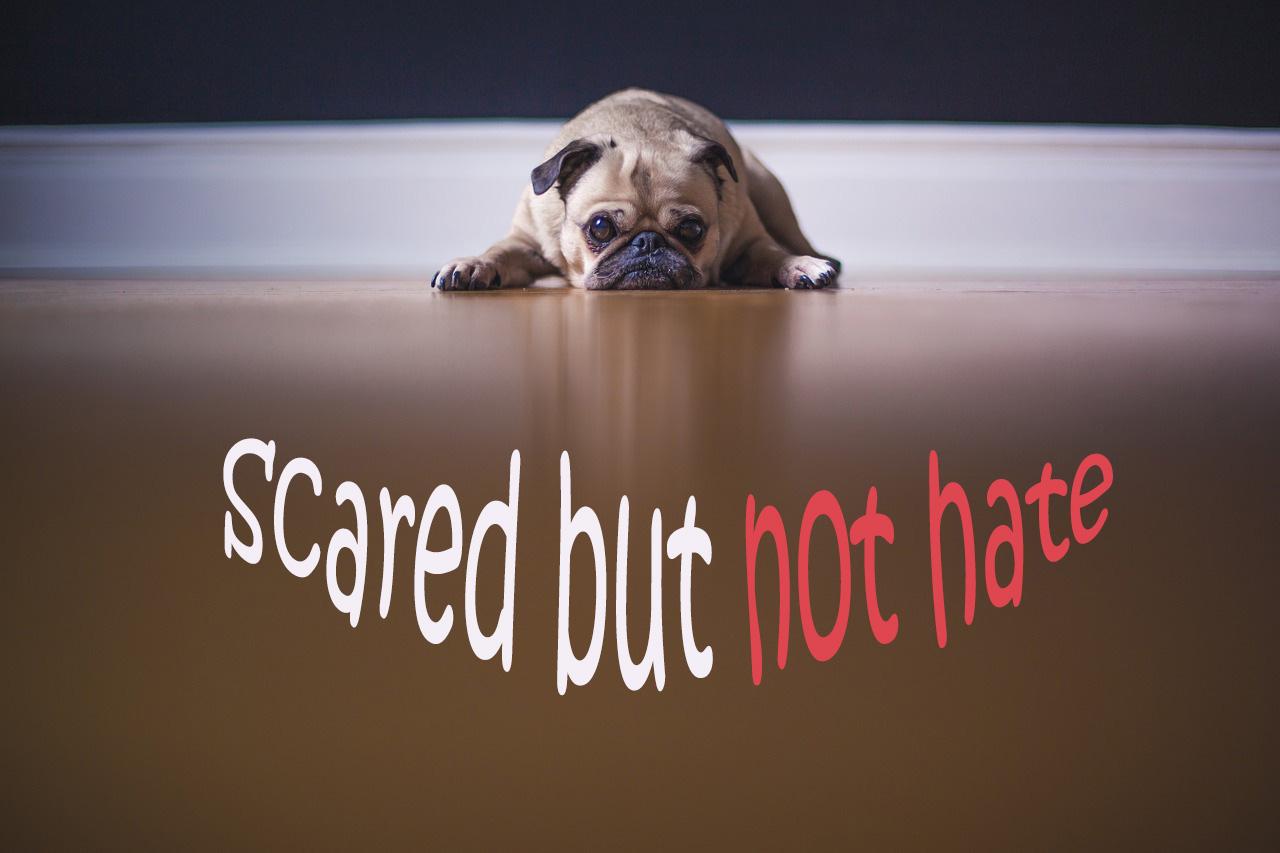 Dogilike.com :: วิธีรับมือกับสุนัข ฉบับ คนขี้กลัว ที่อยากเลี้ยงสุนัข