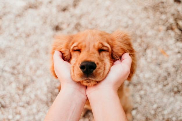 Dogilike.com :: 6 วิธีรับมือกับ Covid-19 ฉบับคนเลี้ยงหมา