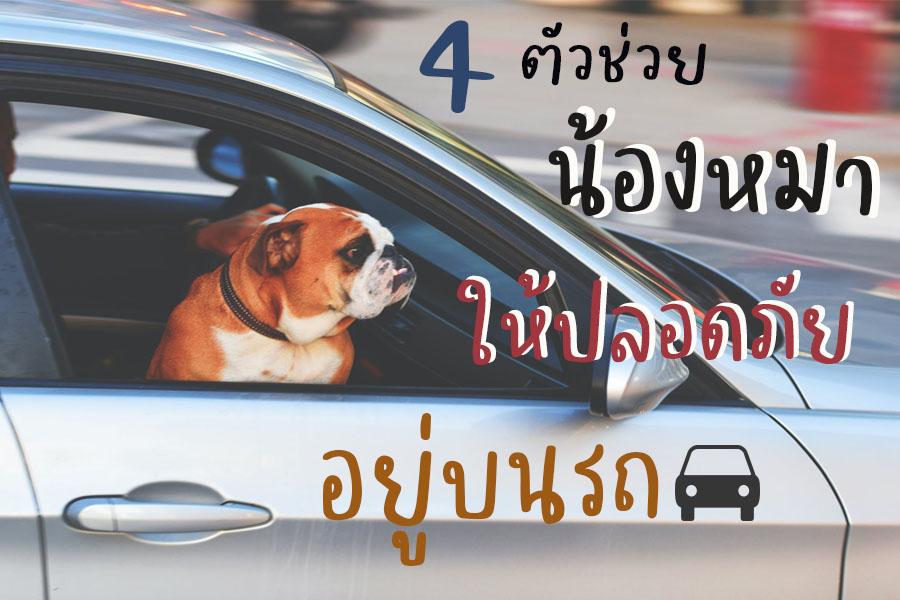 Dogilike.com :: 4 ตัวช่วยน้องหมาให้ปลอดภัยอยู่บนรถ