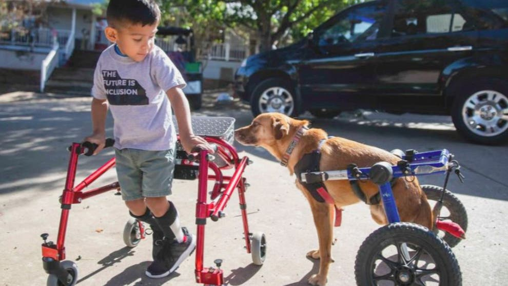 Dogilike.com :: สารคดีสุดตรึงใจที่เผยเรื่องราวของคนและสัตว์ที่ช่วยเหลือซึ่งกันและกัน