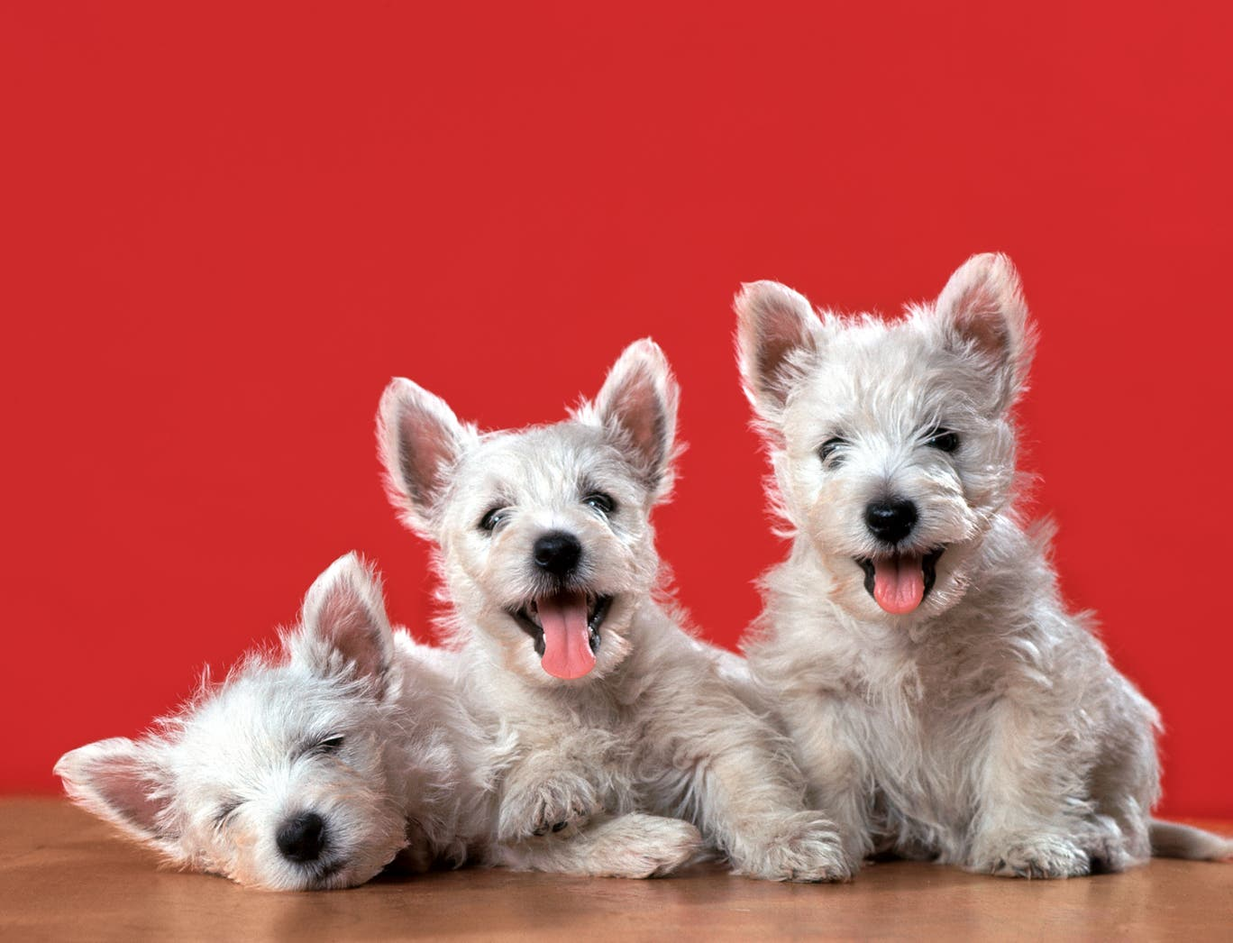 Dogilike.com :: เผยภาพน่ารัก! เมื่อสัตว์เลี้ยงสุดรักถูกถ่ายทอดผ่านเลนส์กล้อง