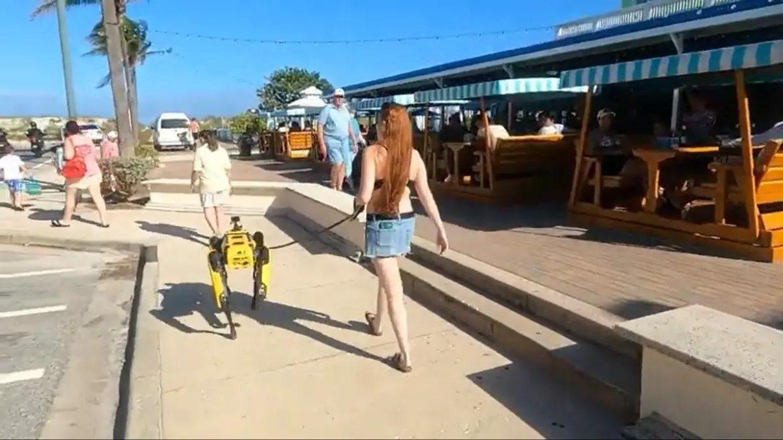 Dogilike.com :: ฮือฮา! สาวฟลอริดาจูงหุ่นยนต์สุนัขเดินเล่นชายหาด