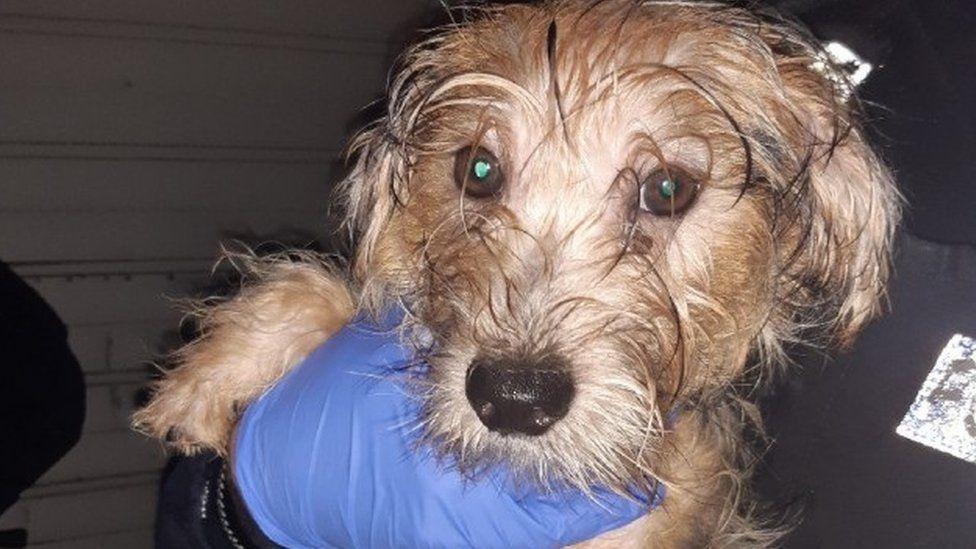 Dogilike.com :: เจ้าหน้าที่ตำรวจเข้าช่วยเหลือลูกสุนัขที่ถูกขังไว้ในกรงหนู