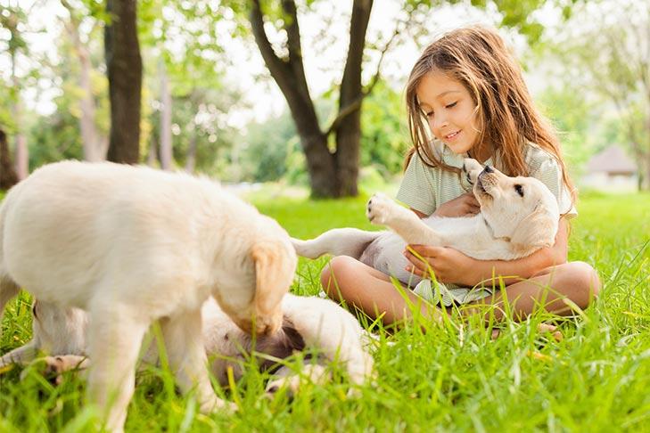 Dogilike.com :: 5 เคล็ดลับเลี้ยงน้องลูกหมาตัวใหม่ตามหลักวิทยาศาสตร์