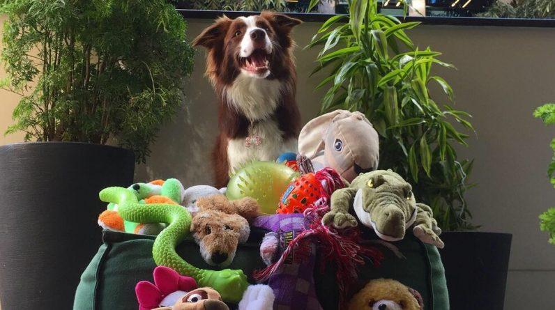 Dogilike.com :: จะรู้ได้อย่างไรว่า สุนัขของเราฉลาดแค่ไหน ?