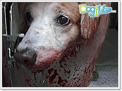 Dogilike.com :: 10 й╤р╧║рцЁЛ╘ь║Ю╘т╧ ╥уХ╣Им╖цу╨╬р╧Им╖карД╩кркам ╣м╧╥уХ 1