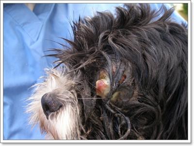Dogilike.com :: 10 สถานการณ์ฉุกเฉิน ที่ต้องรีบพาน้องหมาไปหาหมอ ตอนที่ 2