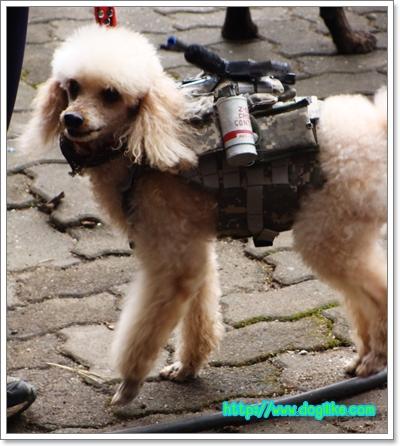Dogilike.com :: สนุกสุดน่ารักกับ มหกรรมสัตว์เลี้ยงครั้งที่ 10