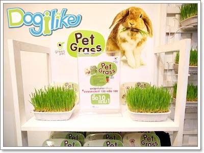 Dogilike.com :: Dogilike พาเที่ยวพาทัวร์ PET EXPO 2011 ... ตอนที่1