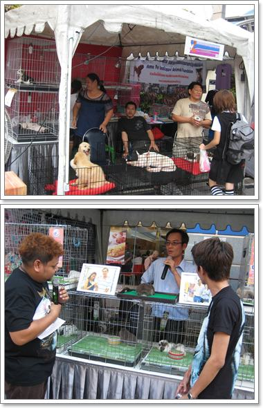 Dogilike.com :: พาเที่ยวงาน LOVE 2 SHARE PETS FUNNY CHARITY SHOW
