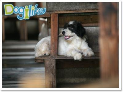"""Dogilike.com :: Dogilike дїа¬'и¬ЅЇй""""єгµйЅЎйІњй"""" Њ—≤є""""°""""√ 44"""