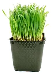 Dogilike.com :: Pet Grass ╒ИргйреуммцЛА║╧т╓