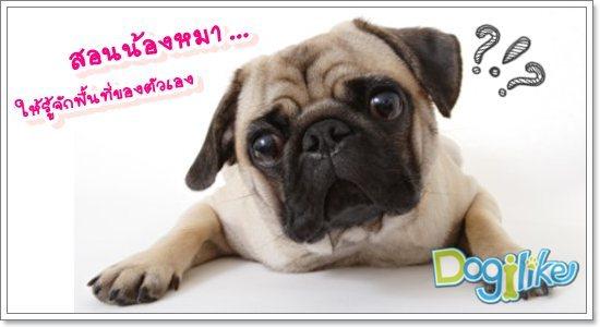 Dogilike.com :: กำหนดพื้นที่สำหรับน้องหมา