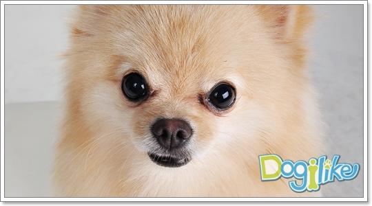 Dogilike.com :: จัดการพฤติกรรมก้าวร้าวของน้องหมายังไงดี?